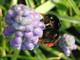 Bee feeding and pollinating