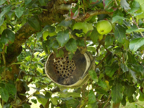 Insect hotel in apple tree